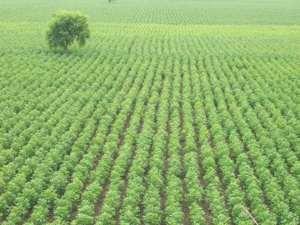 agriculture-farms