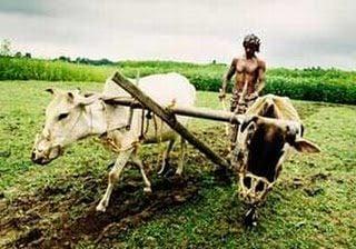 farmers+loans