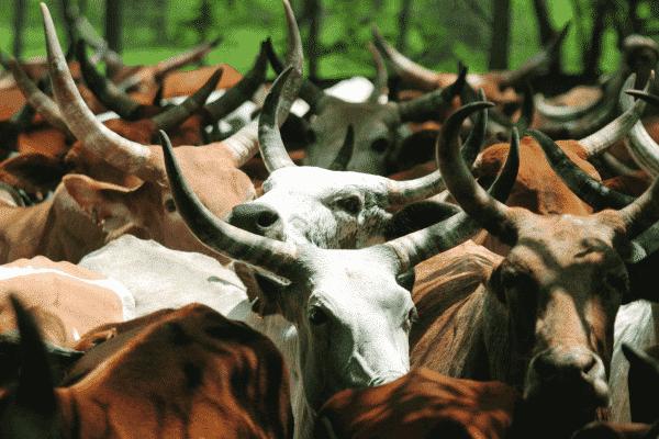 livestock-india-2014