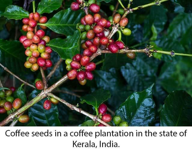 ripe-seeds